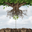 Equipment Finance Advisor Article - Neumann Finance – Banking on a Clean Slate